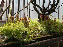 Foto piante carnivore