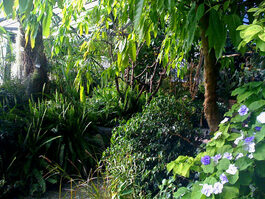 Foto piante tropicali